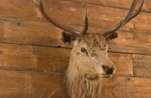objetdeco_the elk in the woods_london 5
